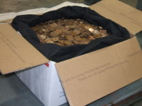 68 lbs of copper pennies